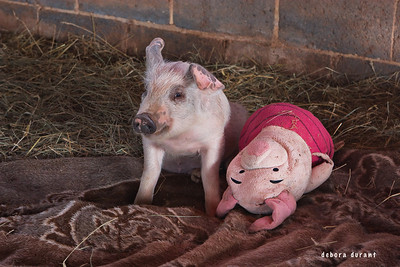 Harley and Piglet