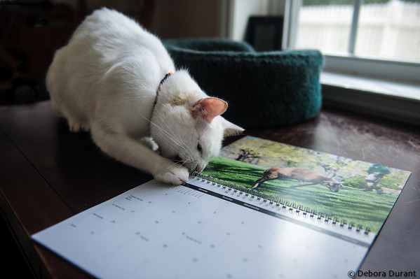 Jake helping with the calendar